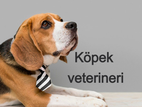 Köpek veterineri