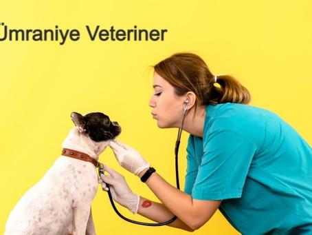 Ümraniye veteriner