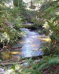 Tributary | Environmental Consulting and Legal Representation in Vancouver, BC