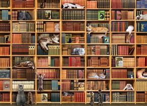 Cat Puzzling