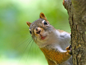 Squirrels, T-Shirts And a New Venture