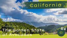 California: Golden State of Avos