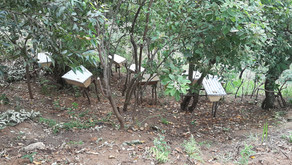 Bee Keeping Project in Mbunga