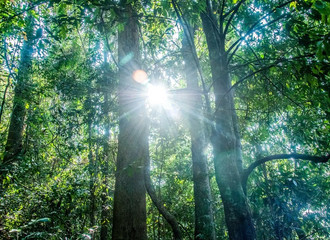 """The team's calculation """"shows clearly that forest restoration is the best climate change so"""
