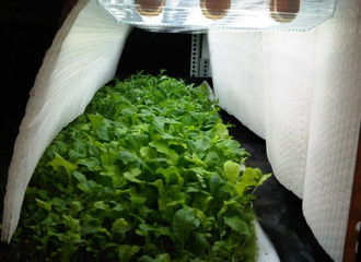 New urban prefabricated agriculture system – less space, less water and no pesticides