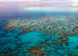 The Great Barrier Reef May Be Restored Using Electricity