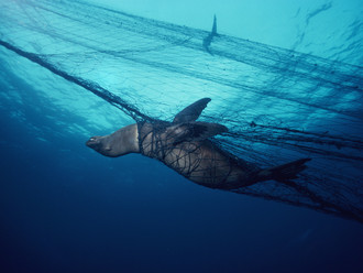 Blue: A Love Letter to the Ocean What makes this new Australian film so compelling?