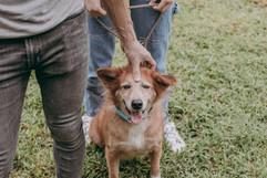 Even doggos love acupressure massage.