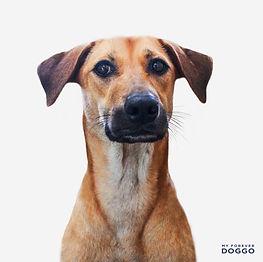 SPCA9.jpg