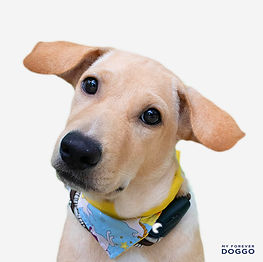 Enzo (SPCA) (2).jpg