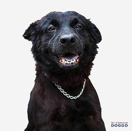 B7_Doggo 6.jpg