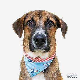 Rupert (SPCA).jpg