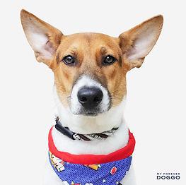 Benji (SPCA).jpg