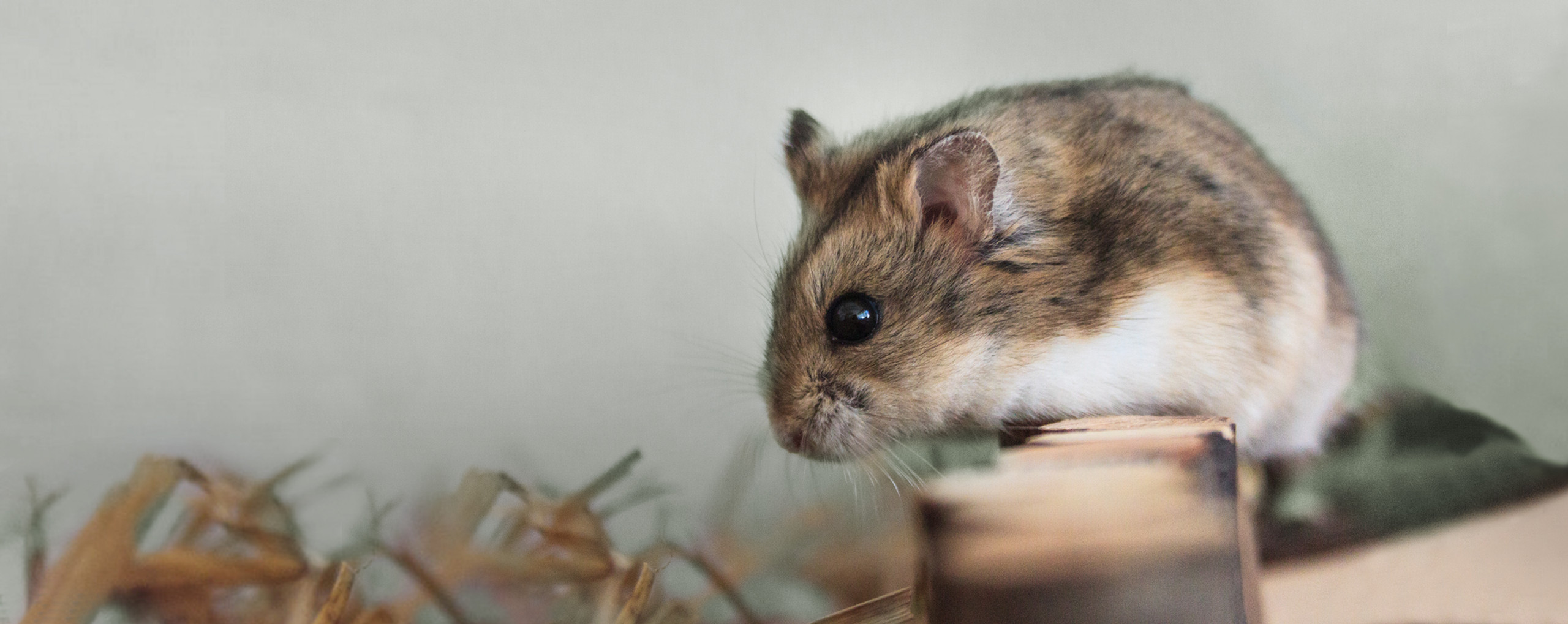 Pet hamster and Sterifab