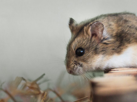 Burnout - das Hamsterrad