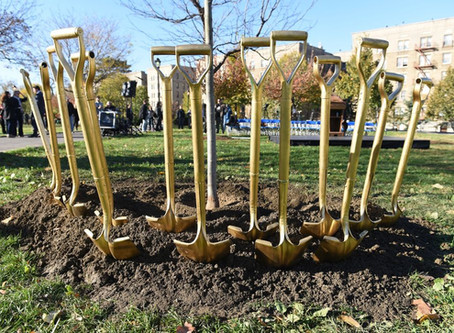 Can planting trees make a city more equitable?