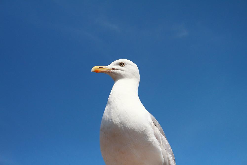 A Brief Guide to Living in Brighton - Seagull