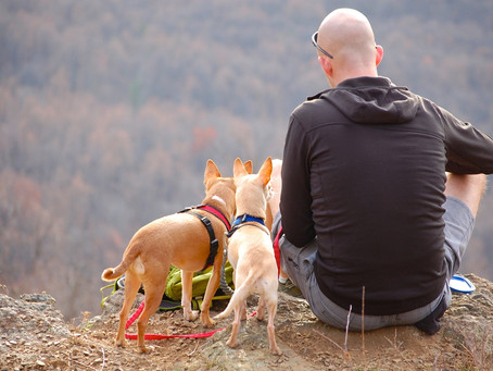Stress Free Dog, How to guide to the Sit-Spot