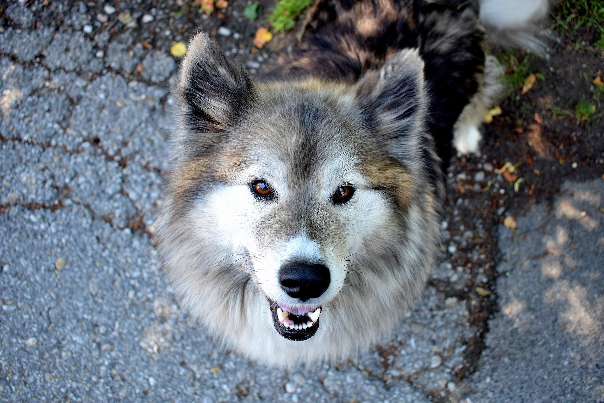dog-2410046_1920