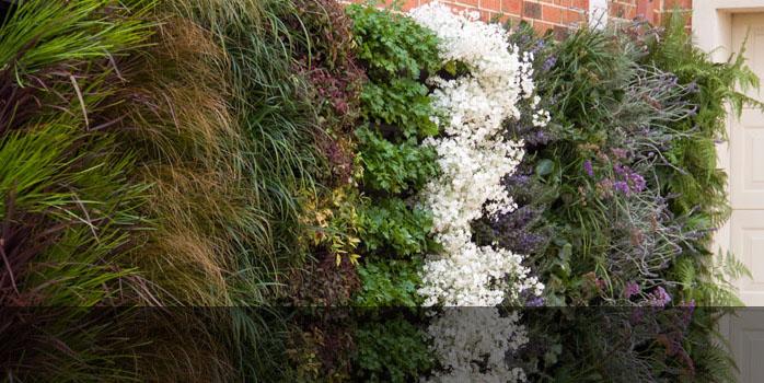 Wall Garden Green Wall