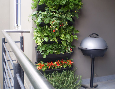 Wall Garden With Vegetables