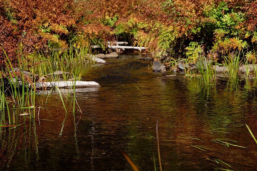 Ruisseau de décharge du lac - Association pour la protection et prévention - APRLB