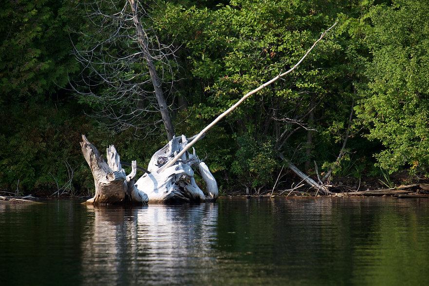 L'écosystème fragile du lac Bowker - protection des rives, de la qualité de l'eau, des impacts du nautisme, de la pêche, de l'utilisation de pesticides, etc