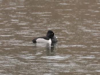 Pour reconnaître les oiseaux qui vivent autour du lac Bowker