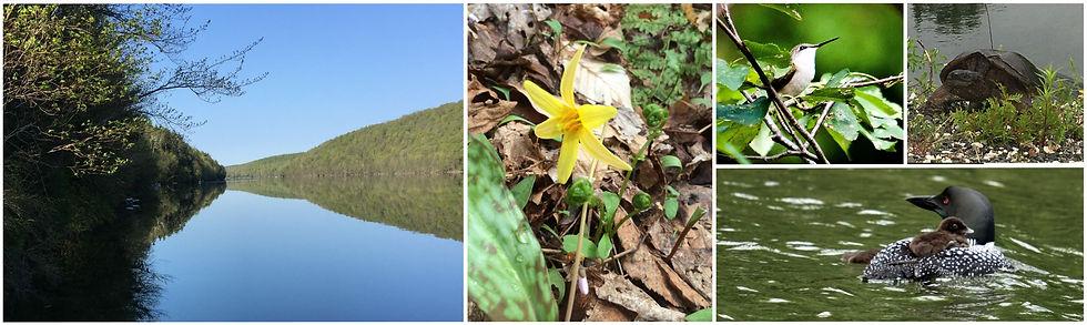 Association des propriétaires riverains du lac Bowker - Le printemps