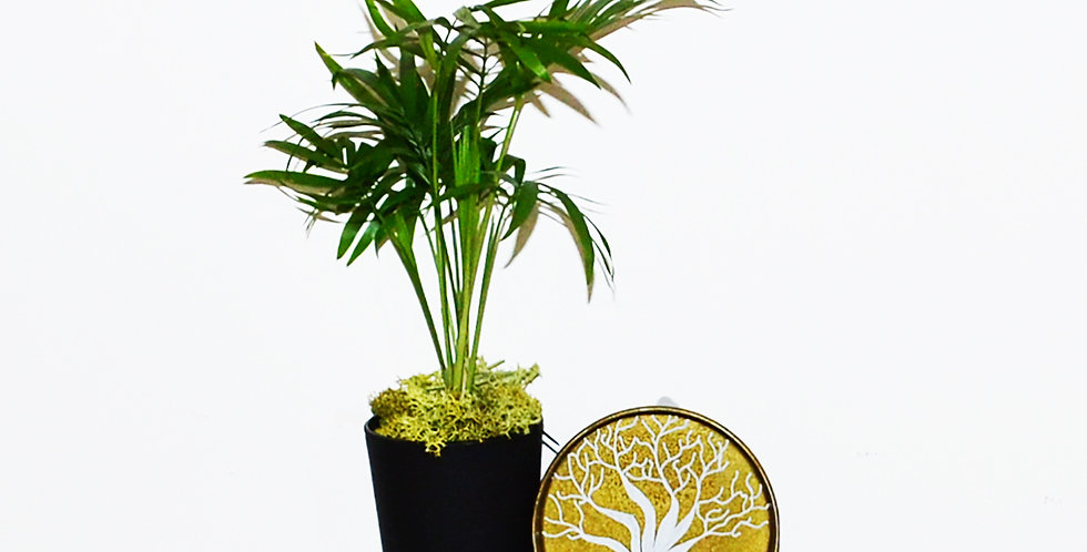 Hayat Ağacı Serisi Altın Plaka ve Tekli Chamadore