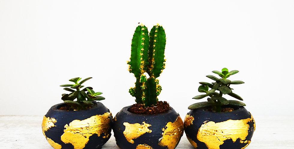 Dünya Saksıda Dikenli Kaktüs ve Echeveria Sukulent
