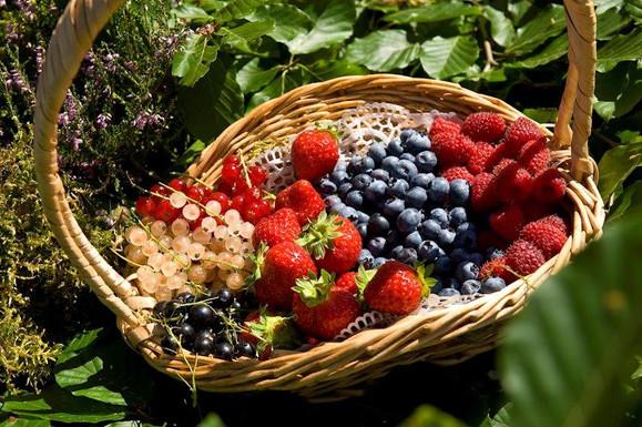 Panière de fruits