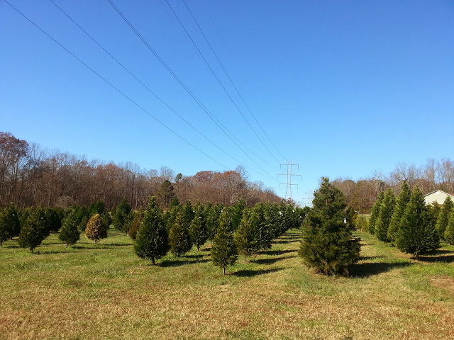 Christmas Tree Farm in Greenville SC