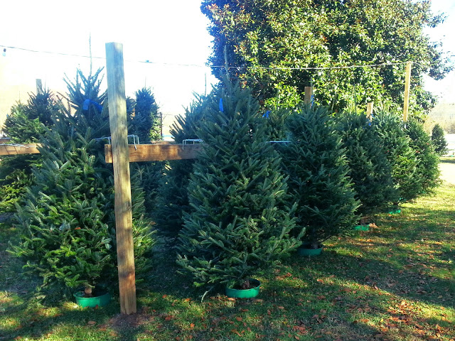 Fraiser Firs available!