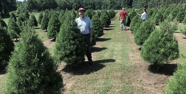 Frampton in the pines (1).jpg