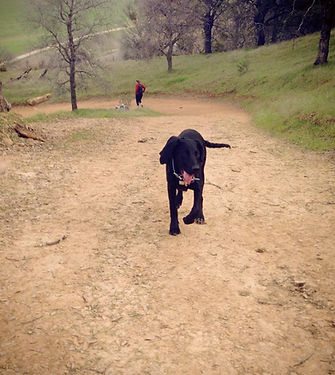 Pet Dog walking Brentwood Discovery Bay Livermore