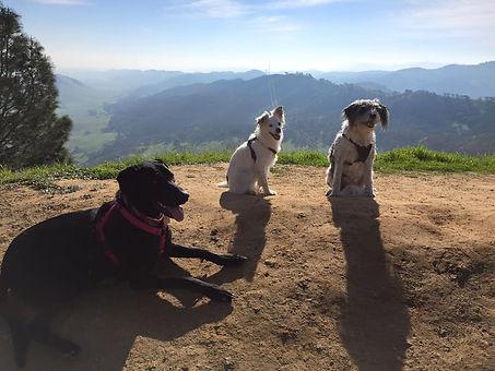 professional dog walker; dog walking; dog-friendly hiking trail