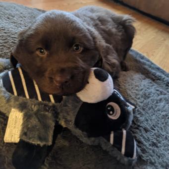 Meet Mocha