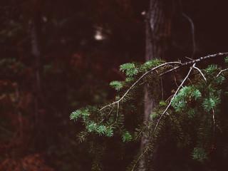 tree tones.jpg