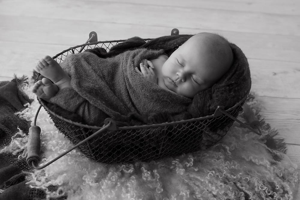 illawarra newborn photography