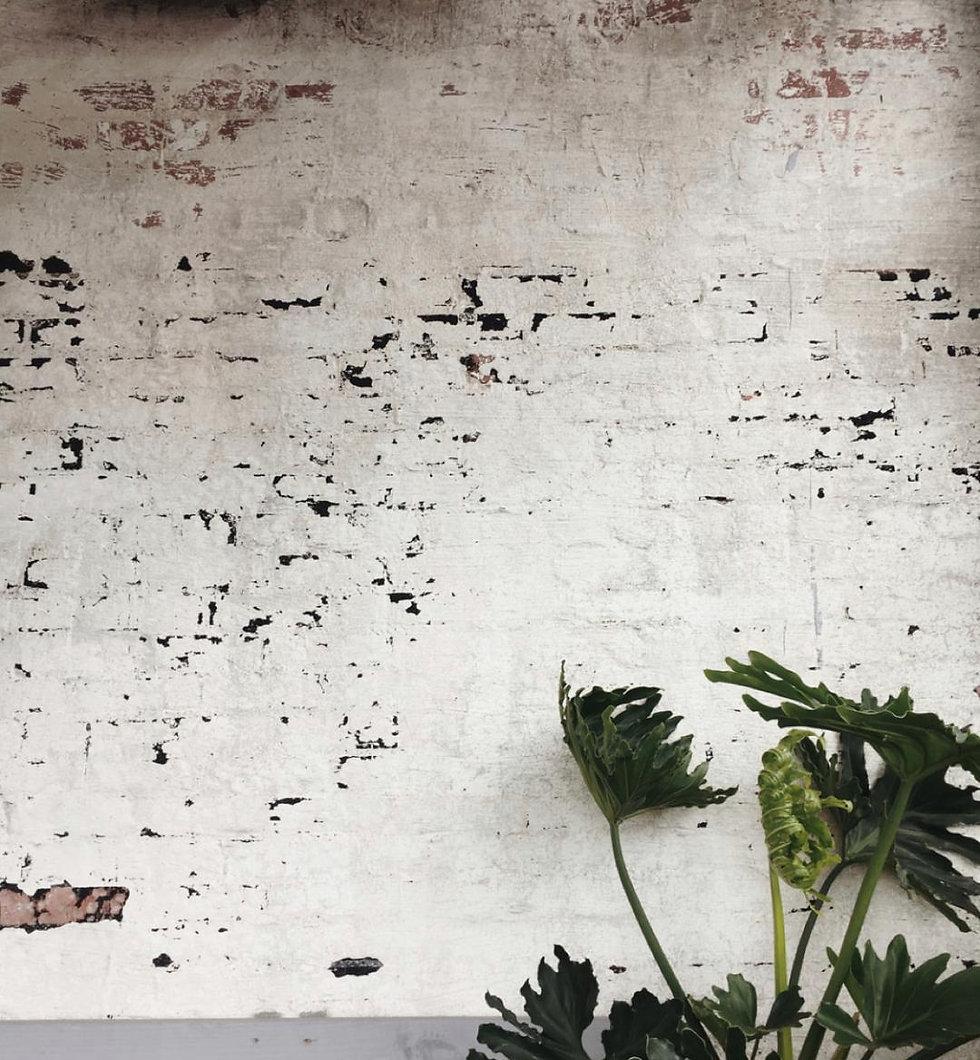 plants with brick.jpg