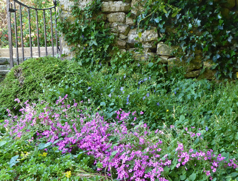 The old cottage garden