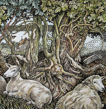 Sheep, hedgerow