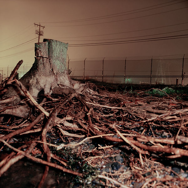 Dead tree, power plant Boston