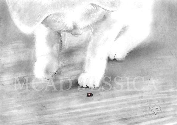 DESSIN | Chaton jouant avec une coccinelle