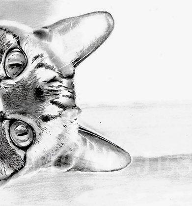 Dessin | Chat curieux