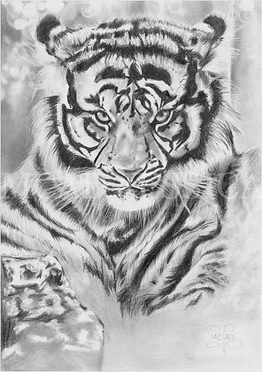 DESSIN | Oeil du Tigre