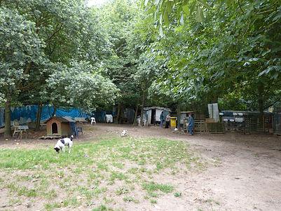 Refuge chiens 91 essonne jardin central