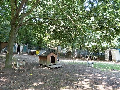 Refuge chiens 91 essonne espace du milieu