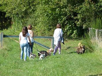 devenir bénévole refuge chien 91